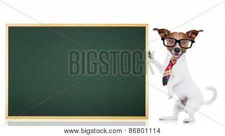 Dog School Teacher