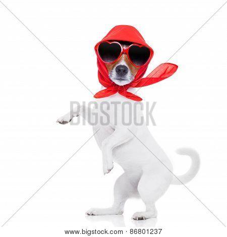 Lady Diva Dog