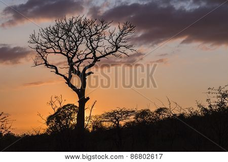 Wilderness Trees Sunrise