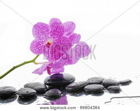 Lying down branch pink orchid with stones on wet