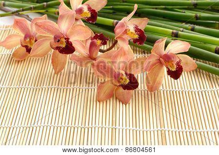 Branch orchid and bamboo grove on mat