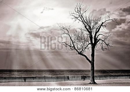 Sunbeams on beach tree