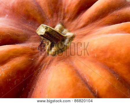 Pumpkin background.