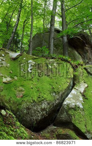 Forest with covered with moss stones. Dreamlike. Beauty in nature