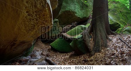 Rocks in the forest. Beautiful roots on the rocks. Spring in the forest