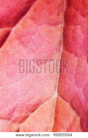 abstract autumnal background: close up of red leaf