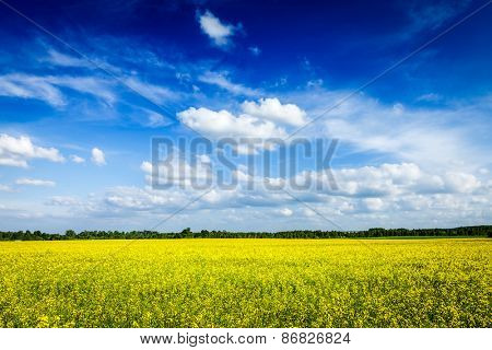 Spring summer background - yellow canola field with blue sky
