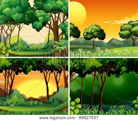 Four scenes of forest at day and night time