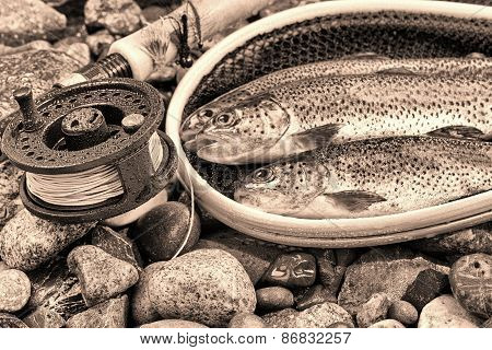 Vintage Concept Of Fly Reel And Pole With Trout In Net