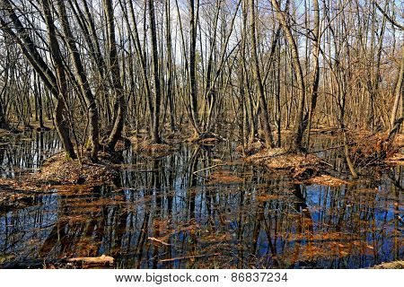 Nice scene with bog in forest