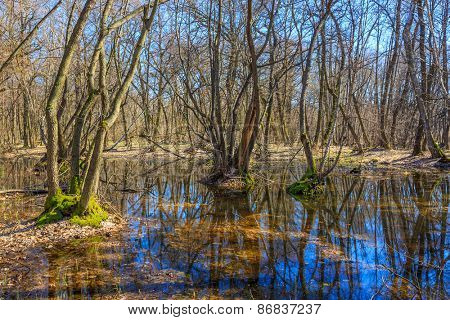 landscape with bog in forest at a nice spring day
