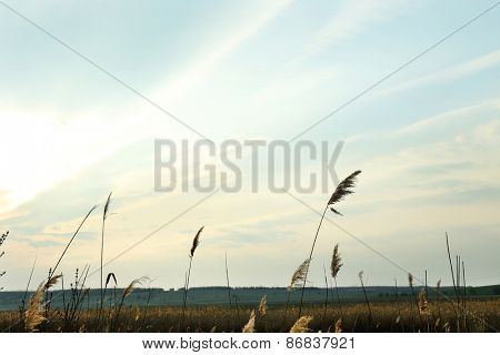 Beautiful view of blue sky and dried grass