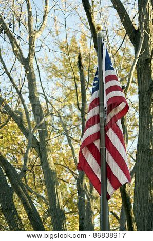 USA Flag and trees