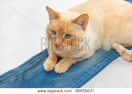Cat On Jeans