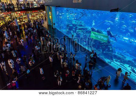 Largest Aquarium Of The World In Dubai Mall