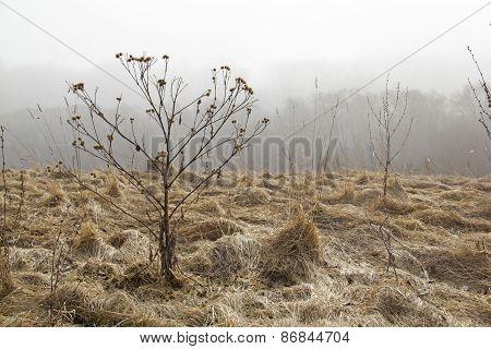 Stalk In Autumn