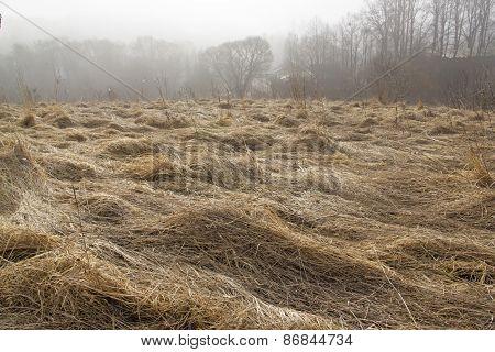 Grass In Autumn