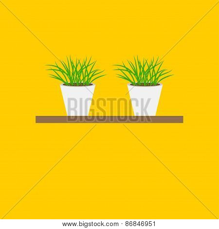 Grass In Flower Pot On Shelf Growing Icon Set Isolated White Background Flat Design