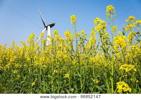 Wind Turbines In Spring