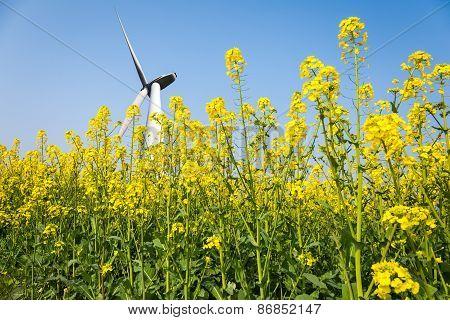 Wind Turbines In Spring
