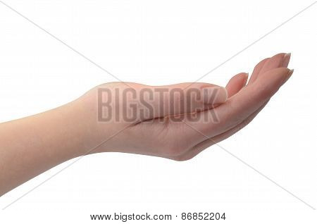 Woman's Hand Isolated On White