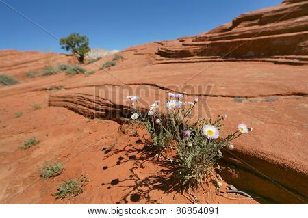 Wild flowers growing on sand dunes
