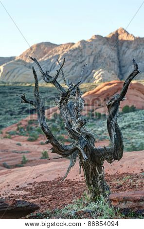 Gnarled tree on petrified sand dunes