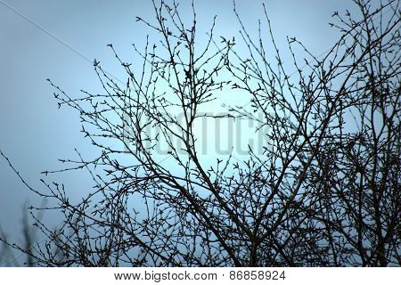 Trees with uplifted background