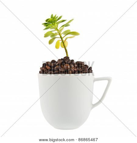 Green plant growing from the cup