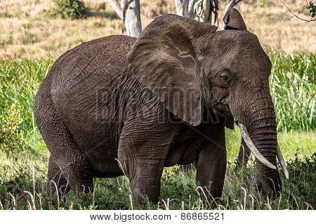 Isolated Elephant in the forest