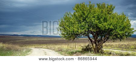 Green Grass Field and tree