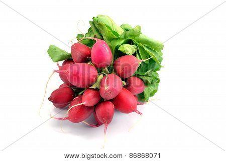 A bunch of fresh radishes
