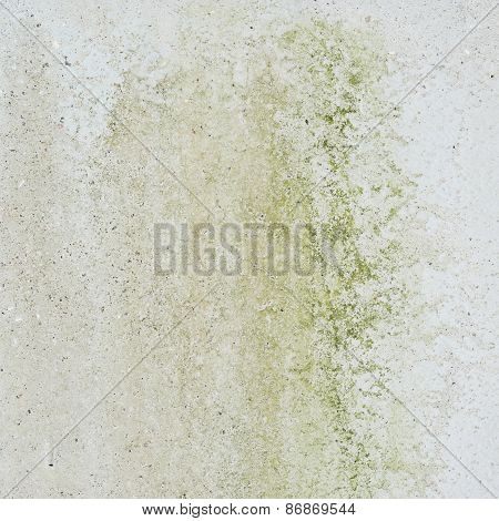 Concrete wall covered with mold