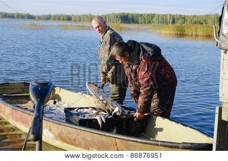 Fishermen With Catch Of Fish Cregonus In Boat