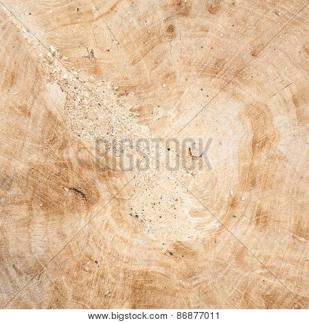 Tree's cut fragment of wood