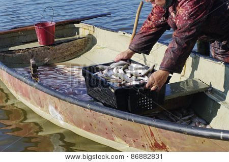 Catch Of Fish  In Boat
