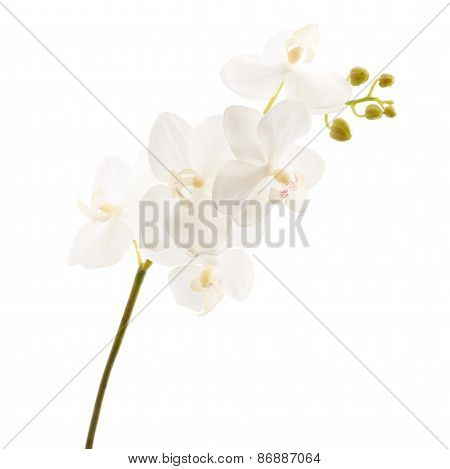 Artificial orchid flower isolated