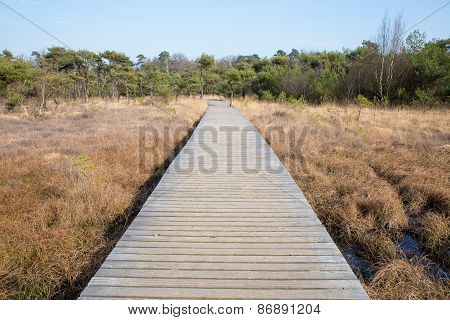 Wooden path in grass and forest winter landscape