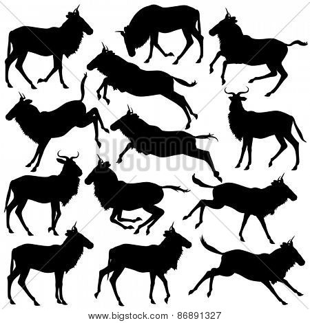 Set of illustrated silhouettes of adult wildebeest standing, walking, running and jumping