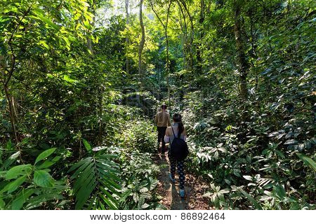Trekkers walking in the dense jungle of the Cat Ba island, Halong bay, Vietnam