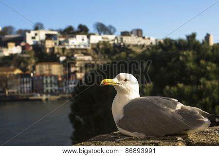 Sea gull sitting on the coast in the port city.