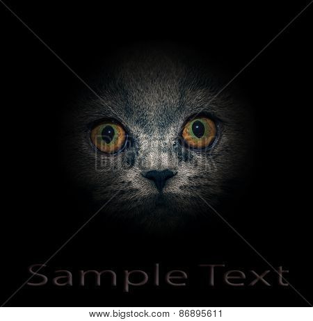 View from the darkness. Muzzle a cat on a black background