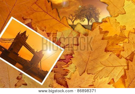 Colorful autumn leaves background, London