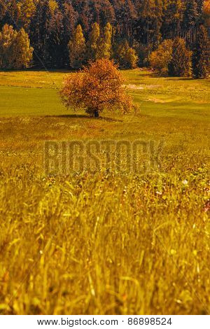 Autumn lanscape with trees