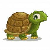 stock photo of turtle shell  - Cute cartoon turtle isolated vector on white - JPG