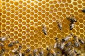 picture of swarm  - bees swarming on a honeycomb - JPG