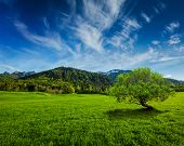 stock photo of bavarian alps  - Alpine meadow in Bavarian Alps - JPG