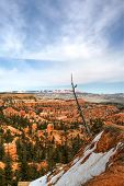 stock photo of hoodoo  - Dramatic tree in canyon within Bryce Canyon with Hoodoos in background - JPG
