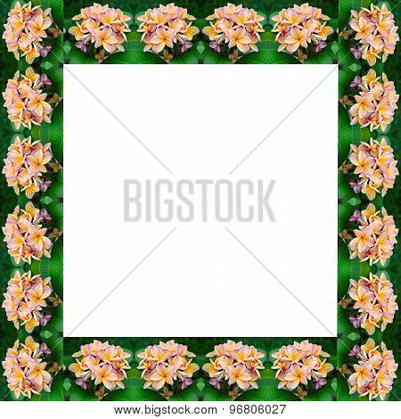 Frangipani Flower Frame
