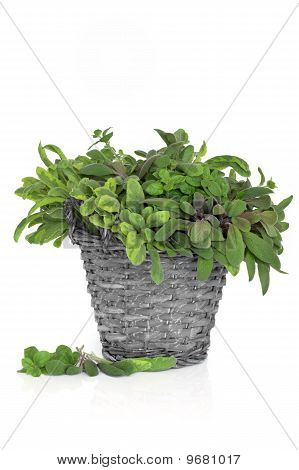 Sage And Oregano Herb Leaves